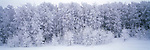 Frost hangs on the branches of a forest on a winter day in Yellowstone National Park in Wyoming.