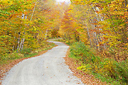 Autumn foliage along Gale River Road in Bethlehem, New Hampshire. Gale River Road is a seasonal road closed during the winter season.