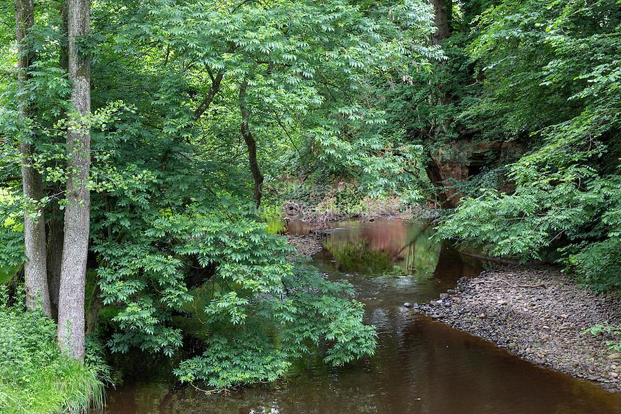 Hadrian's Wall Footpath, Stream between Newtown and Walton, Cumbria, England, UK.