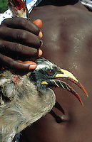 Mali. Province of Segou. Cinzana. Cinzana Agricultural Research Station is run by the Mali Institut d'Economie Rurale and a sponsorship of Syngenta Foundation for sustainable agriculture. A young boy has catched and wounded a bird by firing stones with his sling in order to protect the crops from predators.  © 2003 Didier Ruef