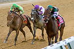 """ELMONT, NEW YORK - OCT 7: Diversity #1, ridden by Irad Ortiz Jr., wins the Jockey Club Gold Cup, a """"Win & You're In' event, at Belmont Park on October 6, 2017 in Elmont, New York. ( Photo by Sue/Eclipse Sportswire/Getty Images)"""