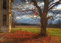 Freshly fallen leaves blow across the fields at the Braun farm as the sun breaks between clouds leading the way to colder temperatures. My Final Photo for Nov. 24, 2014.