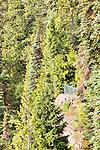 Viewpoint on high cliff.  Ohme Gardens, Wenatchee, Chelan County, Washington, USA.
