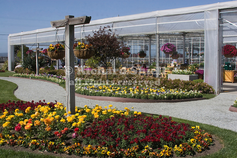 GREENHOUSE AND OUTDOOR DISPLAY AREA, ANNUAL FLOWERS AT PACK TRIALS