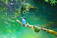 Chile - Lake Llanquihue - Puerto Chico<br />  Laguna Verde - Kingfisher - Pescador<br /> <br /> Full size 69,2 MB
