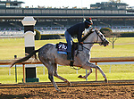 Next, trained by trainer Wesley A. Ward, exercises in preparation for the Breeders' Cup Juvenile at Keeneland Racetrack in Lexington, Kentucky on November 4, 2020.