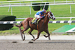 5 JUL 2009:  Munnings is a convincing winner in the Grade II Tom Fool Handicap, running for the first time against older horses.  Jockey was John Velazquez, trained by Todd Pletcher. Owner by Michael Tabor, Ssan Magnier, & Derrick Smith