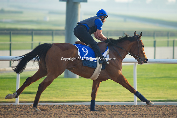 DUBAI,UNITED ARAB EMIRATES-MARCH 29: Rosa Imperial,trained by Andre Fabre,exercises in preparation for the Godolphin Mile at Meydan Racecourse on March 29,2018 in Dubai,United Arab Emirates (Photo by Kaz Ishida/Eclipse Sportswire/Getty Images)