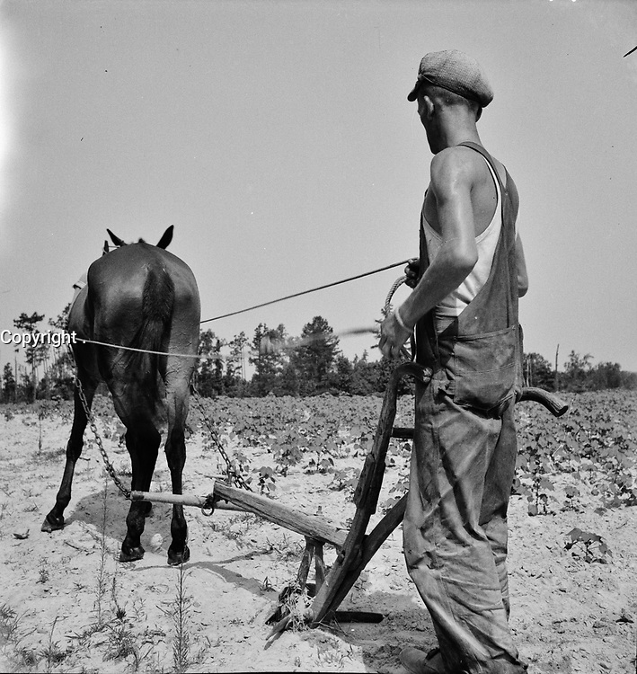 Ploughshares: A North Carolina tenant farmer who works on shares, July 1936.<br /> <br /> Photo by Dorothea Lange