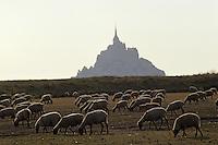 Europe/France/Normandie/Basse-Normandie/50/Manche/Baie du Mont Saint-Michel: Le mont et moutons de pré salé