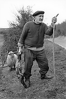 Spain. Basque Country. Gipuzkoa province. Zubieta.  An old farmer wearing a beret holds in his right hand a new born lamb. A mother sheep is standing in the field. A beret is a soft, round, flat-crowned cap, usually of woven, hand-knitted wool, crocheted cotton, wool felt, or acrylic fibre. The Basque Country (Euskadi, País Vasco, Pays Basque), officially the Basque Autonomous Community (Euskal Autonomia Erkidegoa, Comunidad Autónoma Vasca, CAV) is an autonomous community in northern Spain. It includes the Basque provinces of Álava, Biscay, and Gipuzkoa. The Basque Country or Basque Autonomous Community was granted the status of nationality within Spain, attributed by the Spanish Constitution of 1978. The autonomous community is based on the Statute of Autonomy of the Basque Country, a foundational legal document providing the framework for the development of the Basque people on Spanish soil. 18.03.92 © 1992 Didier Ruef