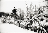 Snow covered trees and fence in  Ft. Tyron Park, NYC<br />