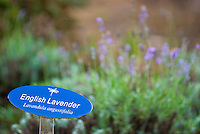 English Lavender signage posted at the Alii Kula Lavender farm at the base of Haleakala, Kula