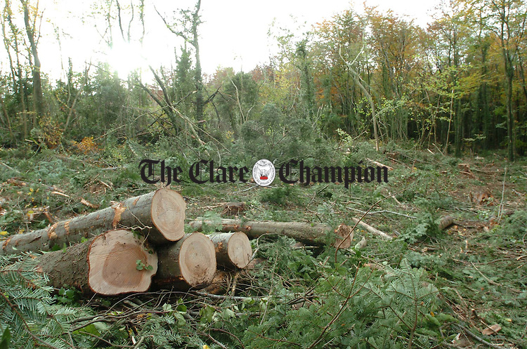 The area of woodland being cleared at Ballybeg outside Ennis. Photograph by John Kelly.