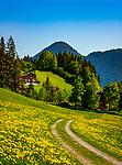 Oesterreich, Tirol, Fruehling im Zillertal, oberhalb von Fuegen: Weg durch Blumenwiese voller Loewenzahn | Austria, Tyrol, springtime at Ziller-Valley, above Fuegen: path through flower meadow full of dandelions