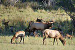 Montana and Wyoming Wildlife