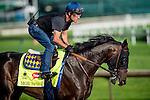 LOUISVILLE, KY - MAY 02: Mor Spirit, trained by Bob Baffert and owned by Michael Lund Petersen, exercises and prepares during morning workouts for the Kentucky Derby and Kentucky Oaks at Churchill Downs on May 2, 2016 in Louisville, Kentucky. (photo by Scott Serio/Eclipse Sportswire/Getty Images)