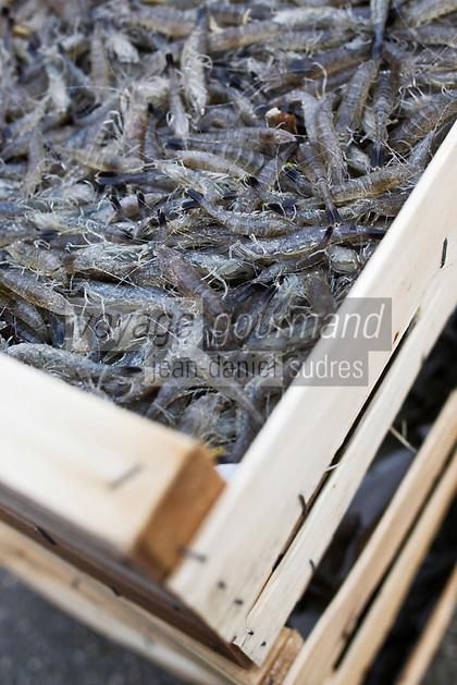 Europe/France/Picardie/80/Somme/Baie de Somme/Le Hourdel: Bateau de pêche à la crevette grise  en baie de Somme- ou Sauterellier - Crevette grise de la  Baie de Somme
