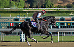 Dance with Fate, trained by Peter Eurton, trains for the Breeders' Cup Juvenile at Santa Anita Park in Arcadia, California on October 29, 2013.