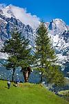 Austria, Salzburger Land, Pinzgau, Dienten: hikers and Hochkoenig mountains | Oesterreich, Salzburger Land, Pinzgau, Dienten: Wanderer unterhalb des Hochkoenig