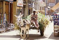 Donkey cart in Cairo