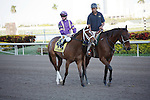 Sacristy  on post parade before winning the Old Hat Stakes(G3) at Gulfstream Park. Hallandale Beach, Florida. 01-01-2012