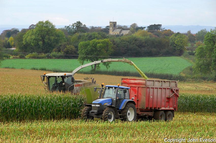 Forage harvesting maize for silage, Bedale, North Yorkshire...Copyright John Eveson 01995 61280..j.r.eveson@btinternet.com