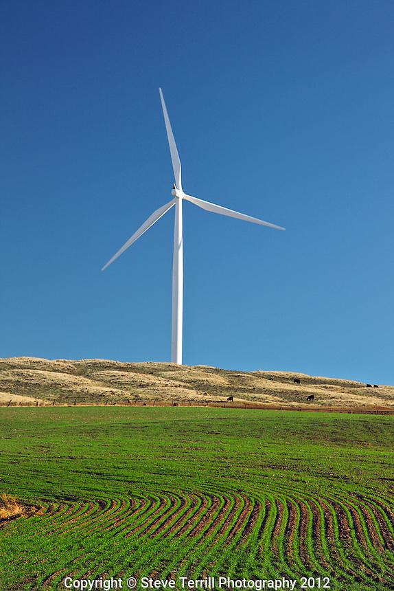 Wind turbine and new crops on hills above Maryhill, Washington