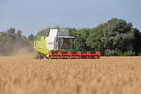 16-7-2021 Harvesting Spring barley in the Lincolnshire Fens<br /> ©Tim Scrivener Photographer 07850 303986<br />      ....Covering Agriculture In The UK....