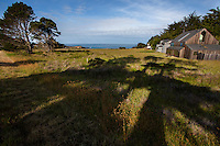 Cypress tree shadow om meadow grasses around coastal homes at The Sea Ranch, protected by hedgerows for privacy and wind protection