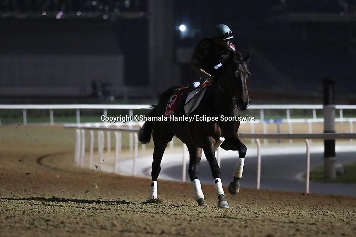 March 25, 2021: Dubai World Cup contender Ajuste Fiscal (URU) trains on the track for trainer Antonio Cintra at Meydan Racecourse, Dubai, UAE. Shamela Hanley/Eclipse Sportswire/CSM