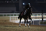 March 25, 2021: Dubai World Cup contender Ajuste Fiscal (URU) trains on the track for trainer Antonio Cintra at Meydan Racecourse, Dubai, UAE. Shamela Hanley/Eclipse Sportswire/CSM