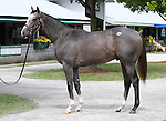 11 September 2011.  Hip #192 Unbridled's Song - Maryfield colt consigned by Bluewater Sales.