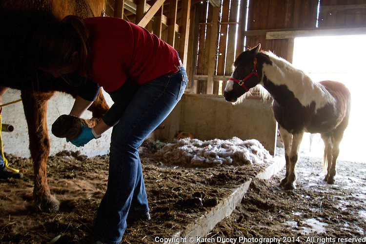 Liana Wiegel, DVM, Equine Practitioner from Pilchuck Veterinary Hospital, volunteers on April 1, 2014  to help horses belonging to Summer Raffo who was killed in the Oso mudslide on March 22, 2014 with basic vet care, grooming and fresh hay.