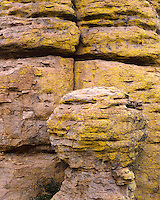 Yellow lichen-covered rock formations in Echo Canyon; Chiricahua National Monument, AZ