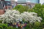 The Southwest Corridor Park in the South End neighborhood, Boston, Massachusetts, USA