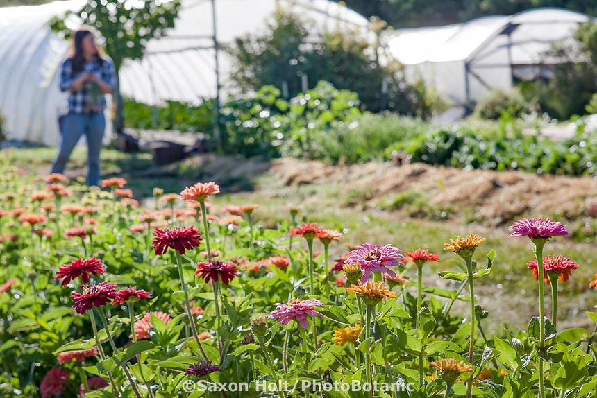 No-till flower farming, Singing Frogs Farm