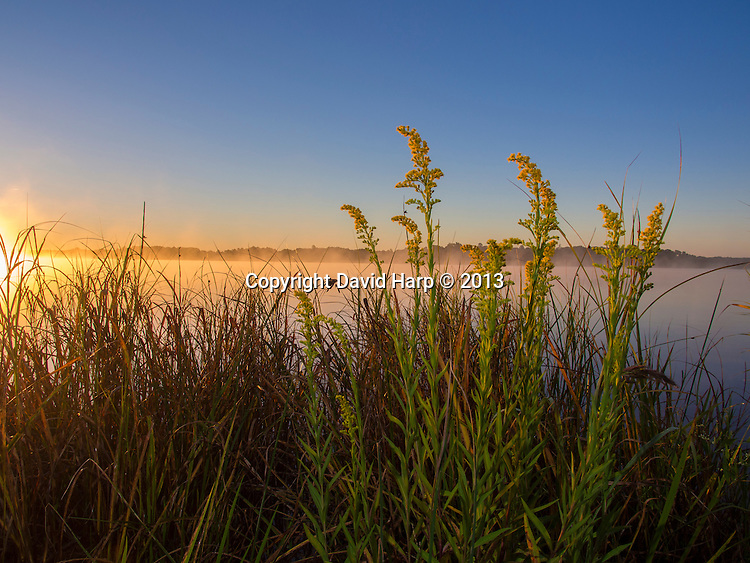 Morning mists and seaside goldenrod on a fall morning at Kingston Landing.