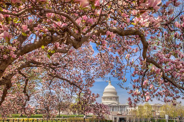Washington DC Photography / Washington DC Photographs / Framed Prints Washington DC Photos / Wall Art / Framed Photographs / Prints for Sale / Washington DC Images / Wall Murals / Images Printed to Metal / Canvas / Acrylic / Wood<br /> <br /> Exceptional Quality Fine Art Photography Prints Washington DC / High-Res Images for Interior Decor Projects / Art for Corporate Decor / Hospitality Decor / Health Care Decor / Interior Design Projects requiring Art of Washington DC<br /> <br /> High Quality Photographs and Custom Fine Art Prints of Washington DC Monuments Landmarks Architecture