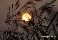 SU17-005z  Sun back lighting grasses