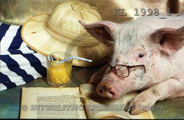 Interlitho, Alberto, ANIMALS, pigs, photos, pig, hat, book, juice(KL1998/1,#A#) Schweine, cerdos
