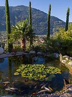 Koi Teich im Garten vom Nutzhof, Algund bei Meran, Region Südtirol-Bozen, Italien, Europa<br /> Koipond in Garden of Nutzhof,  Lagundo near Merano, Region South Tyrol-Bolzano, Italy, Europe
