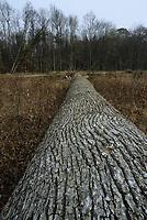 Europe/France/Centre/41/Loir-et-Cher/Forêt de Russy/Environ de Saint-Gervais-la-Forêt : Tronc de chêne utilisé par la Tonnellerie Seguin Moreau à Cognac