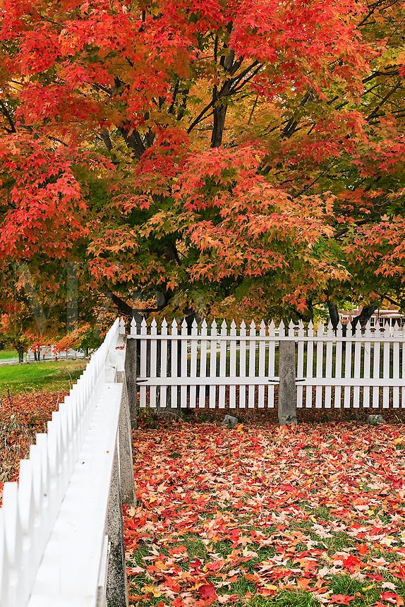 Autumn scenic, Canterbury, New Hampshire, USA