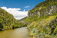 Pororari River and vertical limestone cliffs in Punakaiki, Paparoa National Park, Buller Region, West Coast, New Zealand