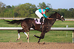 9 April 2010: Zenyatta, riden by Mike Smith, wins the 45th running of the Apple Blossom at Oaklawn in Hot Springs, Arkansas