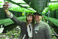 USA. Colorado state. Denver. Sarah snaps a selfie from her husband Shawn and herself in the Green Mile at Medicine Man during their tourist Cannabis Bus tour. The couple came from Nebraska for a weekend to discover the newly legalized recreational marijuana market. Medicine Man began nearly six years ago as a small medical marijuana operation and has since grown to be the largest single marijuana dispensary, both recreational and medical, in the state of Colorado and has aspirations of becoming a national brand if pot legalization continues its march. The 45 meter long room is called The Green Mile which holds row and row of plants in a vegetative state in one of marijuana grow rooms. Cannabis, commonly known as marijuana, is a preparation of the Cannabis plant intended for use as a psychoactive drug and as medicine. Pharmacologically, the principal psychoactive constituent of cannabis is tetrahydrocannabinol (THC); it is one of 483 known compounds in the plant, including at least 84 other cannabinoids, such as cannabidiol (CBD), cannabinol (CBN), tetrahydrocannabivarin (THCV), and cannabigerol (CBG). 20.12.2014 © 2014 Didier Ruef
