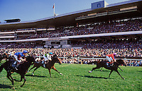 England. Ascot Racecourse.  Horses passing the winning post.