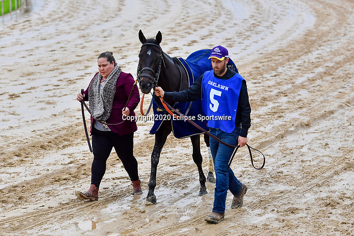 March 14, 2020:  Serengeti Empress (5) with jockey Joseph Talamo aboard during the Azeri Stakes at Oaklawn Racing Casino Resort in Hot Springs, Arkansas on March 14, 2020. Ted McClenning/Eclipse Sportswire/CSM(Photo by Ted McClenning/Eclipse Sportswire/Cal Sport Media)