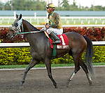 30 January 2010: Cat Can Do and jockey Paco Lopez after the Sunshine Millions Distaff Stakes at Gulfstream Park in Hallandale Beach, FL.